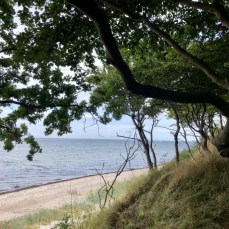 Küste und Wald am Naturschutzgebiet Brooker Wald