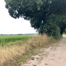 Radweg südlich von Tarnewitz bei Boltenhagen