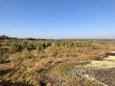 Blick über den Westrand der Kernzone des Himmelmoores