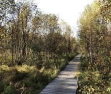 Der Holzsteg des Moorlehrpfades im Himmelmoor
