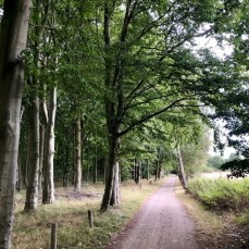 Der Radweg am Naturschutzgebiet Stoltera bei Warnemünde