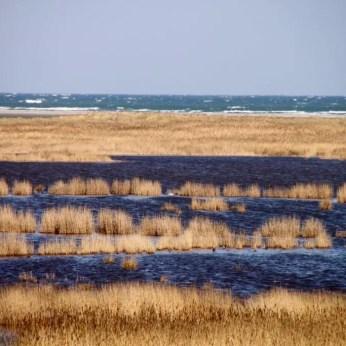 Der Libbertsee auf dem Darß und die Ostsee im Hintergrund