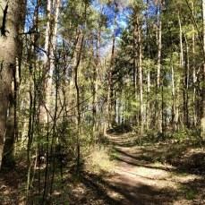 Im Wald südlich von Ohe