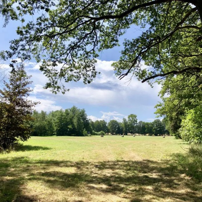 Am Waldrand kurz vor Nonnendorf in Vorpommern