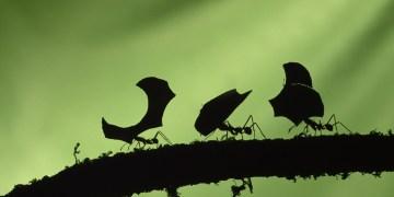 تعليم رسم نملة