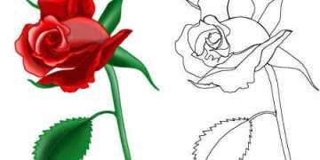 تعلمرسم وردة جورية
