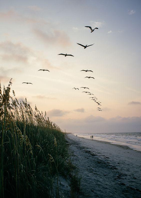 سكيتش رسم طيور الشاطئ - رسم طيور البحر