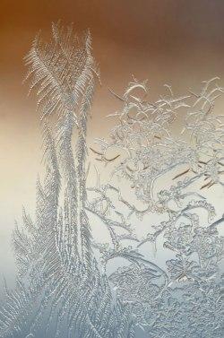 WindowFrost_Crystals2