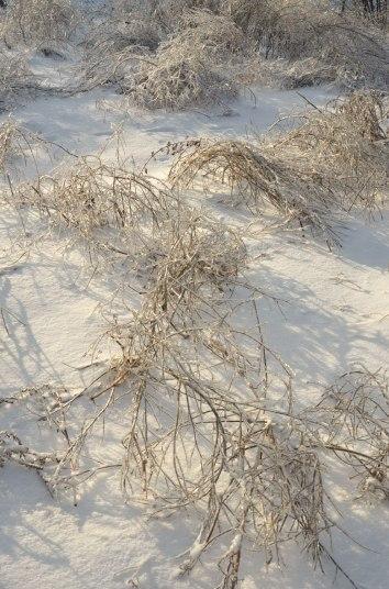 IcedLandscape6_weightedgrasses