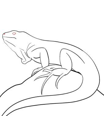 How To Draw An Iguana Step 9