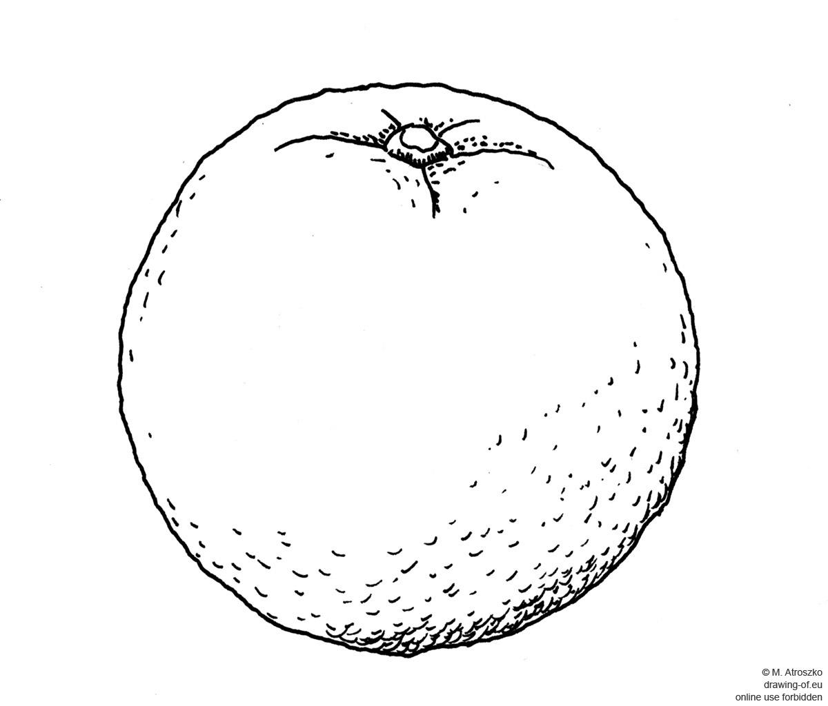 Drawing Of Orange Drawing Of