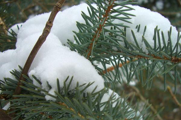 winter art walk glasgow