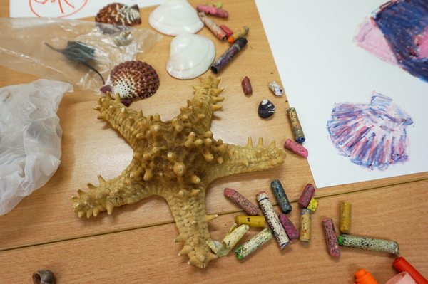 Exploring shells and corals