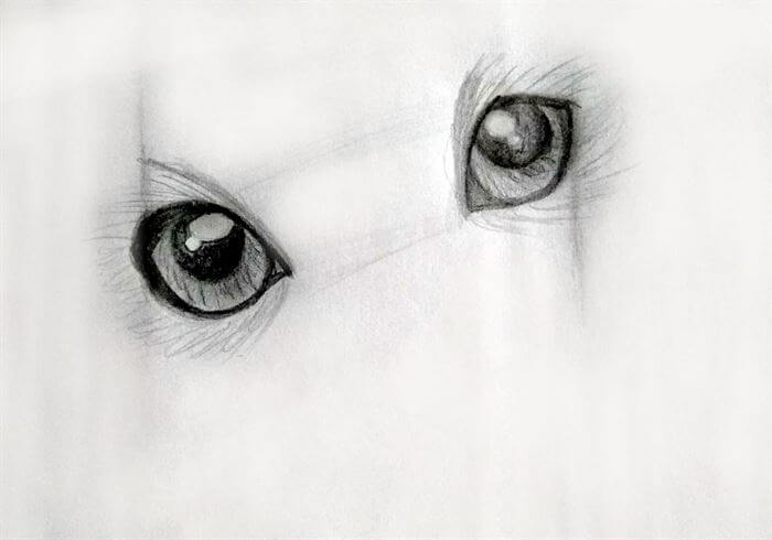 Step 8-dog eye drawing
