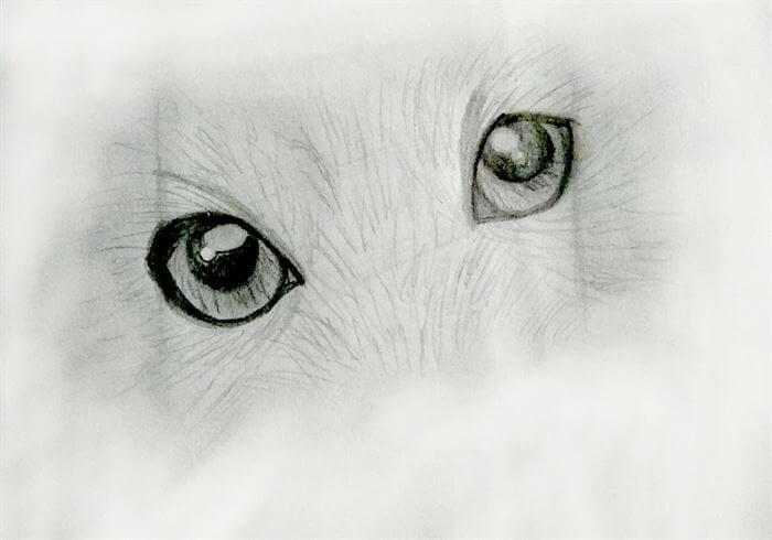 Step 9-dog eye drawing