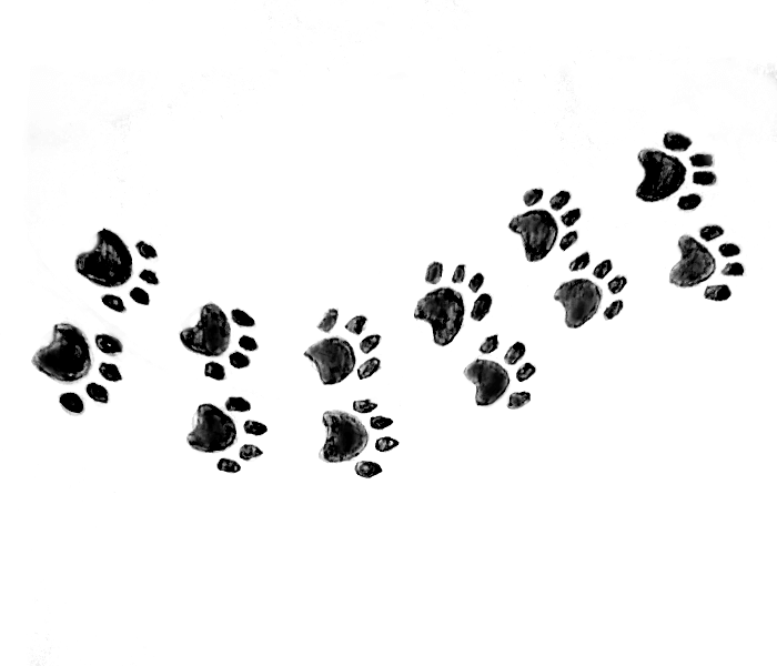 paw print drawing trail