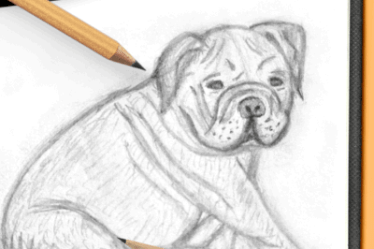 how to draw an english bulldog sitting-small