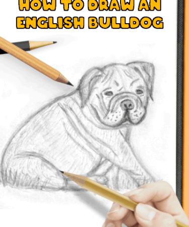 how to draw an english bulldog sitting-small