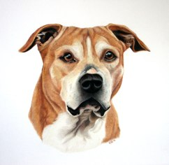 Peter, coloured pencil, 2013
