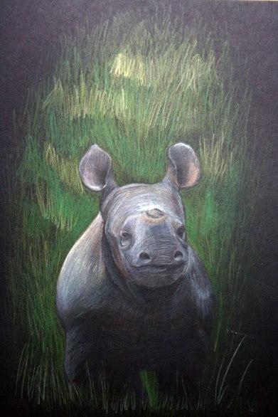 Rhino Calf, coloured pencil on black card, 2011