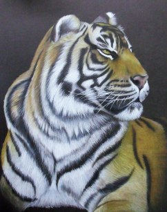 Sumatran Tiger at Auckland Zoo, coloured pencil on black card, 2011