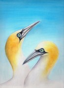 Gannet greeting card, 2013, watercolour