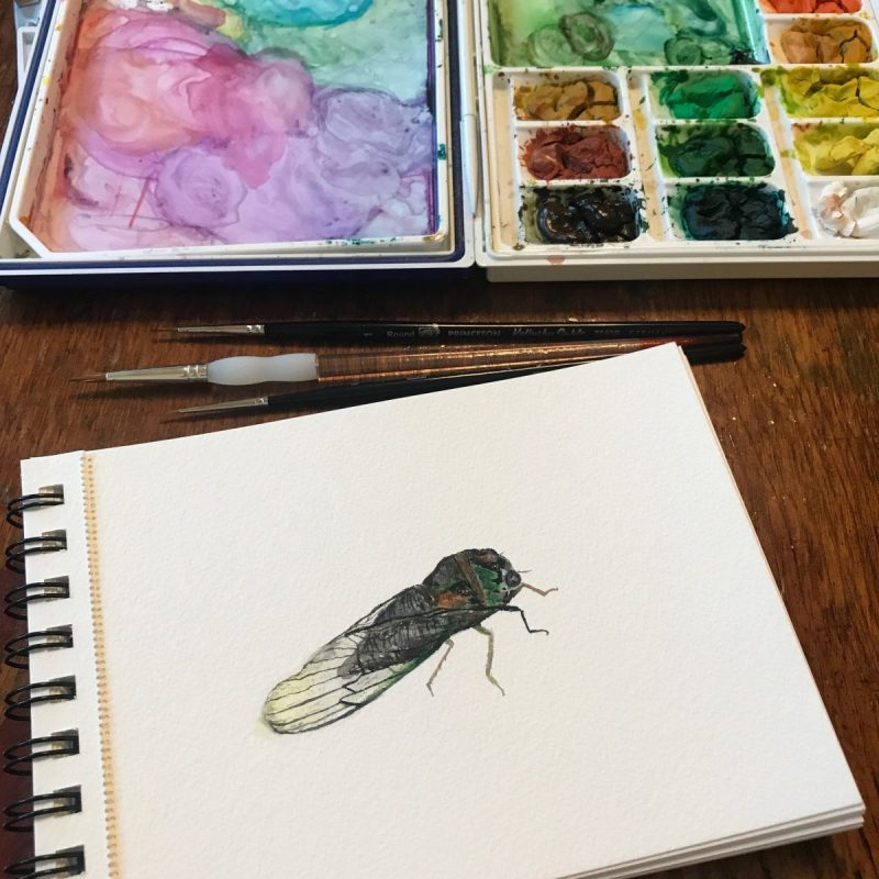 Cicada painting