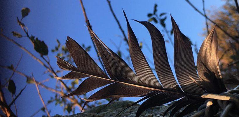 Black Feather Signal by Victoria Burton-Davey