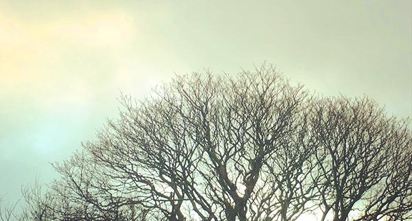 Grey and Breezy Thursday