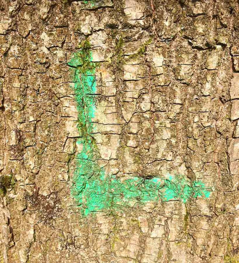 Forest Rune by Victoria Burton-Davey