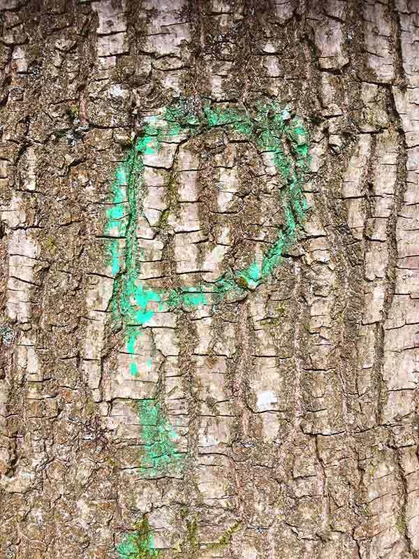 Forest Rune V by Victoria Burton-Davey