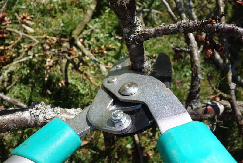 Pruning shears - Why is it important to interpret life through God's eyes?