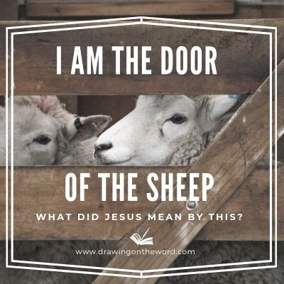 I am the door of the sheep