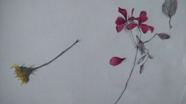 Sketchbook - graphite - wax pencil - fallen flowers