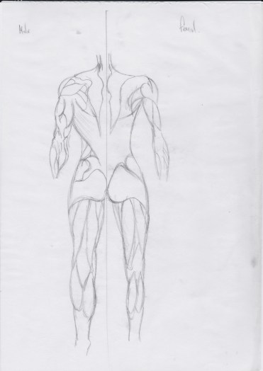 Anatomy5