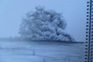 Sketchbook - trees in graphite