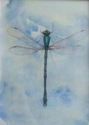 Dragonfly - watercolour and watercolour pencil