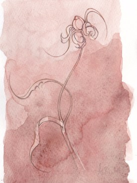 Line drawing - dried flower