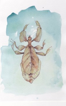 Leaf insect - watercolour/pencil