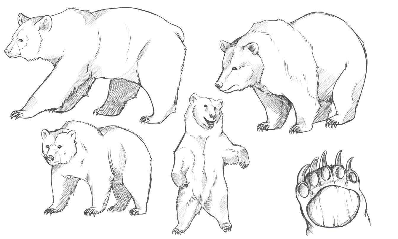 Grizzly Bear Drawing Reference And Sketches For Artists