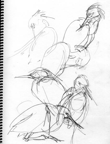 Snowy Egret gesturedrawings