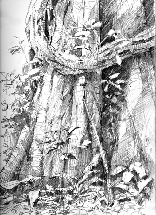 Liana embracing a rainforest trunk