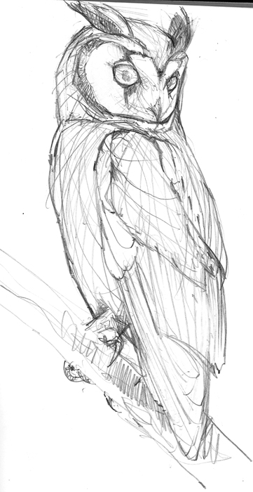 Striped Owl, initial sketch for Birds of T&T