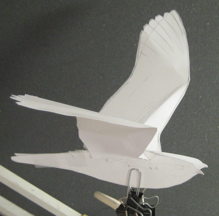 a paper model of a nightjar to sketch from in creating a plate for Birds of Trinidad and Tobago
