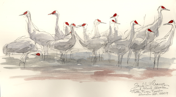 Sandhill cranes at rest on the river.