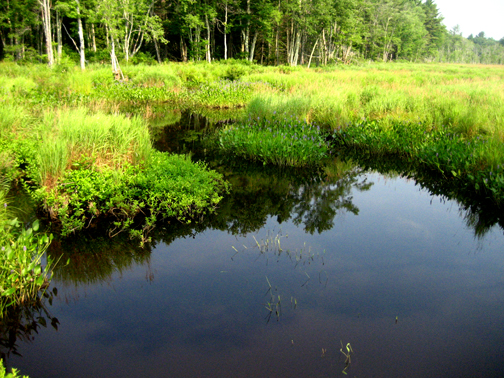 Marsh near Petersham, Massachusetts