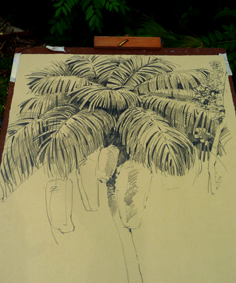 "Astrocaryum drawing in progress, drawn plein air. 18"" x 24"" Rives BFK."