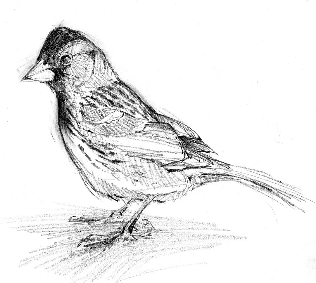 Is A Bird