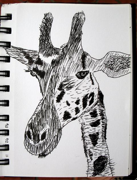 Giraffe; click for larger version