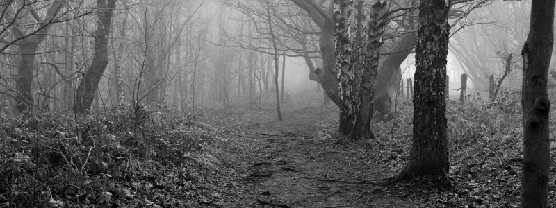 Three Counties Open Photography Exhibition 2017